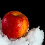 Η κόκκινη Apple στο χιόνι Στοκ Φωτογραφία