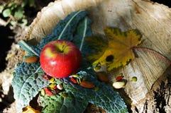 Η κόκκινη Apple στο Kale με το υγιές υπόβαθρο πτώσης καρυδιών μούρων Στοκ εικόνες με δικαίωμα ελεύθερης χρήσης