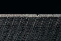 Η κόχη με την ατέλεια Στοκ Φωτογραφία