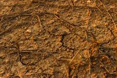 Η κλιματική αλλαγή, το έδαφος είναι ξηρά, ξηρασία, ραγισμένο έδαφος στοκ εικόνες με δικαίωμα ελεύθερης χρήσης
