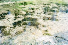 η λίμνη είναι μικρή αλλά πολλά ψάρια στοκ εικόνες