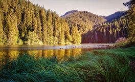 Η λίμνη στη δασική δασική λίμνη πολυόροφων κτιρίων νερό σε μια δασική λίμνη με τα δέντρα πεύκων Στοκ Φωτογραφία