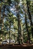 Η λίμνη Algonquin Campground δύο ποταμών του εθνικού όμορφου φυσικού δασικού τοπίου Καναδάς πάρκων στάθμευσε το αυτοκίνητο τροχόσ Στοκ εικόνα με δικαίωμα ελεύθερης χρήσης