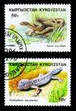 Η λεοπάρδαλη Gecko (macularius Eublepharis) και χωρίζει σε τετράγωνα το φίδι (tessallata Natrix), ερπετά serie, circa το 1996 στοκ φωτογραφία με δικαίωμα ελεύθερης χρήσης