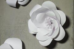 Η Λευκή Βίβλος ανθίζει το υπόβαθρο, γαμήλια διακόσμηση, στοκ εικόνες