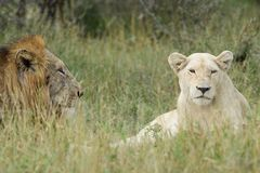 Η λευκιά κυρία και ο πρίγκηπάς της στοκ φωτογραφία με δικαίωμα ελεύθερης χρήσης