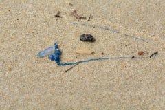 Η μέδουσα Bluebottle με το μακρύ μπλε πλοκάμι έπλυνε επάνω στην παραλία με τα συντρίμμια στοκ εικόνες