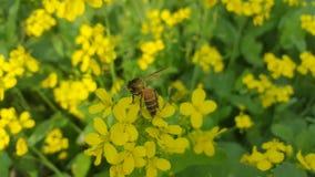 Η μέλισσα στοκ εικόνα