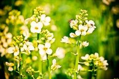 η μέλισσα βρίσκει τα τρόφιμα Στοκ Φωτογραφία