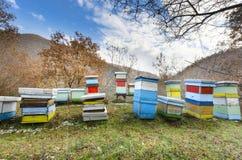 Η μέλισσα μελιού συσσωρεύει το κιβώτιο. Στοκ Εικόνες