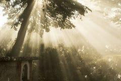 Η μαγική ατμόσφαιρα των ακτίνων του φωτός στοκ φωτογραφία