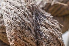 Η μακροεντολή του παλαιού σχοινιού που αρχίζει έσπασε χώρια Στοκ Εικόνα