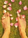 Η μακροχρόνια αρσενική παραμονή ποδιών μεταξύ πεσμένος αυξήθηκε πέταλα στην κοντή ξηρά χλόη Στοκ Εικόνες