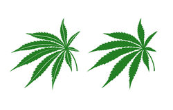 Η μαριχουάνα βγάζει φύλλα Στοκ Εικόνα
