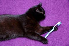 Η μαύρη γάτα αγαπά να φάει με ένα μαχαίρι και ένα δίκρανο επειδή θεωρεί ότι έχει γίνει μέλος αυτής της οικογένειας για καλό στοκ εικόνα