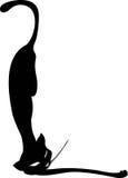 η μαύρη γάτα απομόνωσε το λευκό Στοκ Φωτογραφία