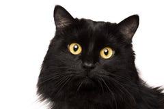η μαύρη γάτα απομόνωσε το λ&eps στοκ φωτογραφία