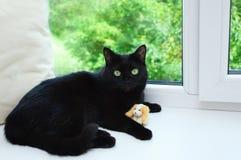 Η μαύρη γάτα βρίσκεται σε μια στρωματοειδή φλέβα παραθύρων κοντά σε ένα παράθυρο στοκ φωτογραφίες