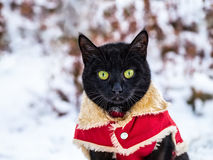 Η μαύρη γάτα είναι υπαίθρια στο χιόνι στοκ φωτογραφία με δικαίωμα ελεύθερης χρήσης