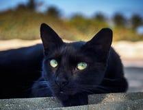 Η μαύρη γάτα κοιτάζει Στοκ φωτογραφία με δικαίωμα ελεύθερης χρήσης