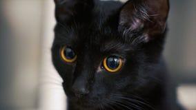 Η μαύρη γάτα με τα κίτρινα μάτια συνδετήρας Μαύρη γάτα με τα κόκκινα μάτια στο σπίτι Στοκ φωτογραφίες με δικαίωμα ελεύθερης χρήσης