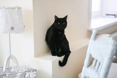 Η μαύρη γάτα σε ένα άσπρο υπόβαθρο κάθεται σε μια στρωματοειδή φλέβα παραθύρων δίπλα σε έναν ξύλινο πίνακα και έναν λαμπτήρα στοκ εικόνα