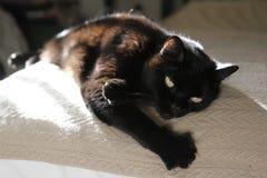 Η μαύρη γάτα χαλαρώνει στο κρεβάτι στοκ φωτογραφία