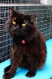 Η μαύρη γάτα στοκ εικόνα