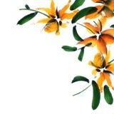 η μαύρη κάρτα χρωμάτισε το floral λευκό ίριδων λουλουδιών Στοκ Φωτογραφίες