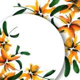 η μαύρη κάρτα χρωμάτισε το floral λευκό ίριδων λουλουδιών Στοκ εικόνα με δικαίωμα ελεύθερης χρήσης