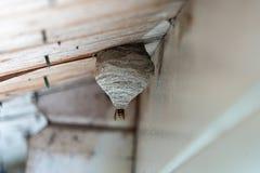 Η μαύρος-κίτρινη σφήκα χτίζει μια φωλιά σφηκών κάτω από μια ξύλινη προεξοχή στεγών στοκ εικόνα