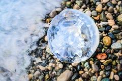 Η μεγάλη μέδουσα βρίσκεται στην ακτή και πλένεται από το θαλάσσιο νερό, άποψη άνωθεν Στοκ Εικόνες