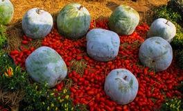 Η μεγάλες πράσινες κολοκύθα και η ντομάτα Στοκ φωτογραφία με δικαίωμα ελεύθερης χρήσης
