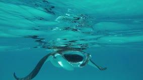 Η μεγάλη ακτίνα Manta κολυμπά άμεσα επάνω σε με φιλμ μικρού μήκους