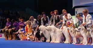 Η μεγάλη ομάδα σκυλιών στο σκυλί παρουσιάζει Στοκ εικόνες με δικαίωμα ελεύθερης χρήσης