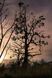 Η μεγάλη σκιά Στοκ φωτογραφία με δικαίωμα ελεύθερης χρήσης