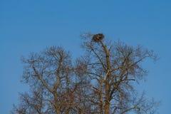 Η μεγάλη φωλιά στην οποία το πουλί ζει Στοκ εικόνα με δικαίωμα ελεύθερης χρήσης