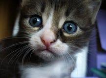 Η μεγάλος-eyed γάτα αναρωτιέται Στοκ φωτογραφία με δικαίωμα ελεύθερης χρήσης