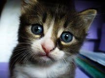 Η μεγάλος-eyed γάτα φαίνεται ήρεμη Στοκ εικόνα με δικαίωμα ελεύθερης χρήσης