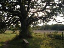Η μεγαλειότητα του δέντρου και της ηρεμίας του στοκ εικόνα