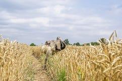 Η μεγαλύτερη Rhea Στοκ φωτογραφίες με δικαίωμα ελεύθερης χρήσης