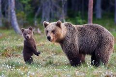 Η μητέρα αντέχει και cub Στοκ εικόνες με δικαίωμα ελεύθερης χρήσης