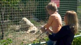 Η μητέρα και ο γιος εξετάζουν το λιοντάρι στο ζωολογικό κήπο φιλμ μικρού μήκους