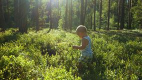 Η μητέρα και ο γιος στην ηλικία ενός έτους συλλέγουν και τρώνε τα άγρια βακκίνια στο δάσος απόθεμα βίντεο
