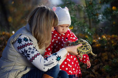 Η μητέρα της παρουσιάζει λίγη χελώνα κορών Στοκ Εικόνα