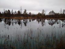 Η μικρή λίμνη στο δάσος Στοκ Εικόνα