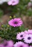 Η μικρή κινηματογράφηση σε πρώτο πλάνο λουλουδιών Στοκ φωτογραφία με δικαίωμα ελεύθερης χρήσης