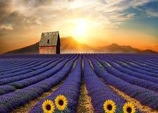 Η μικρή κόκκινη σιταποθήκη lavender στο λόφο Στοκ Εικόνα