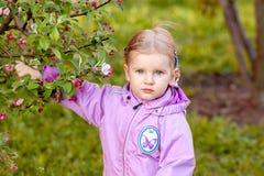 Η μικρή ξανθή εκμετάλλευση ένας κλάδος του δέντρου της Apple Στοκ Φωτογραφία