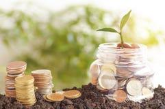η μικρή πράσινη αύξηση δέντρων επάνω στα πλαστικά βάζα και τα χρήματα στο χώμα, Στοκ Φωτογραφίες